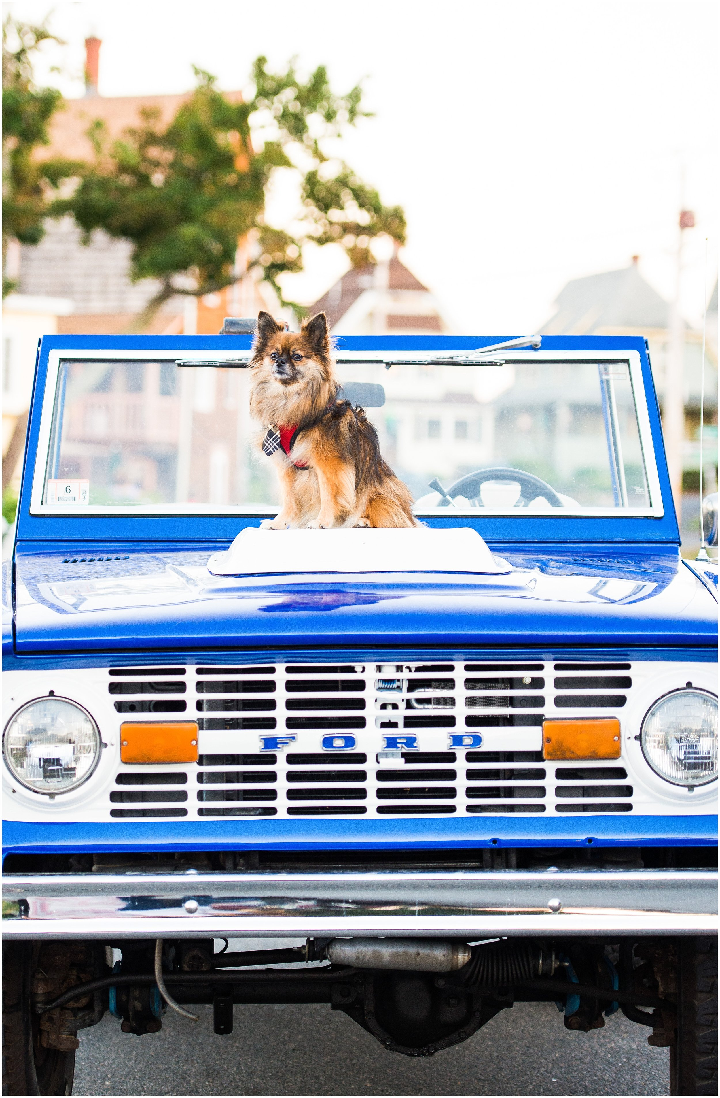 dog in your engagement photo session