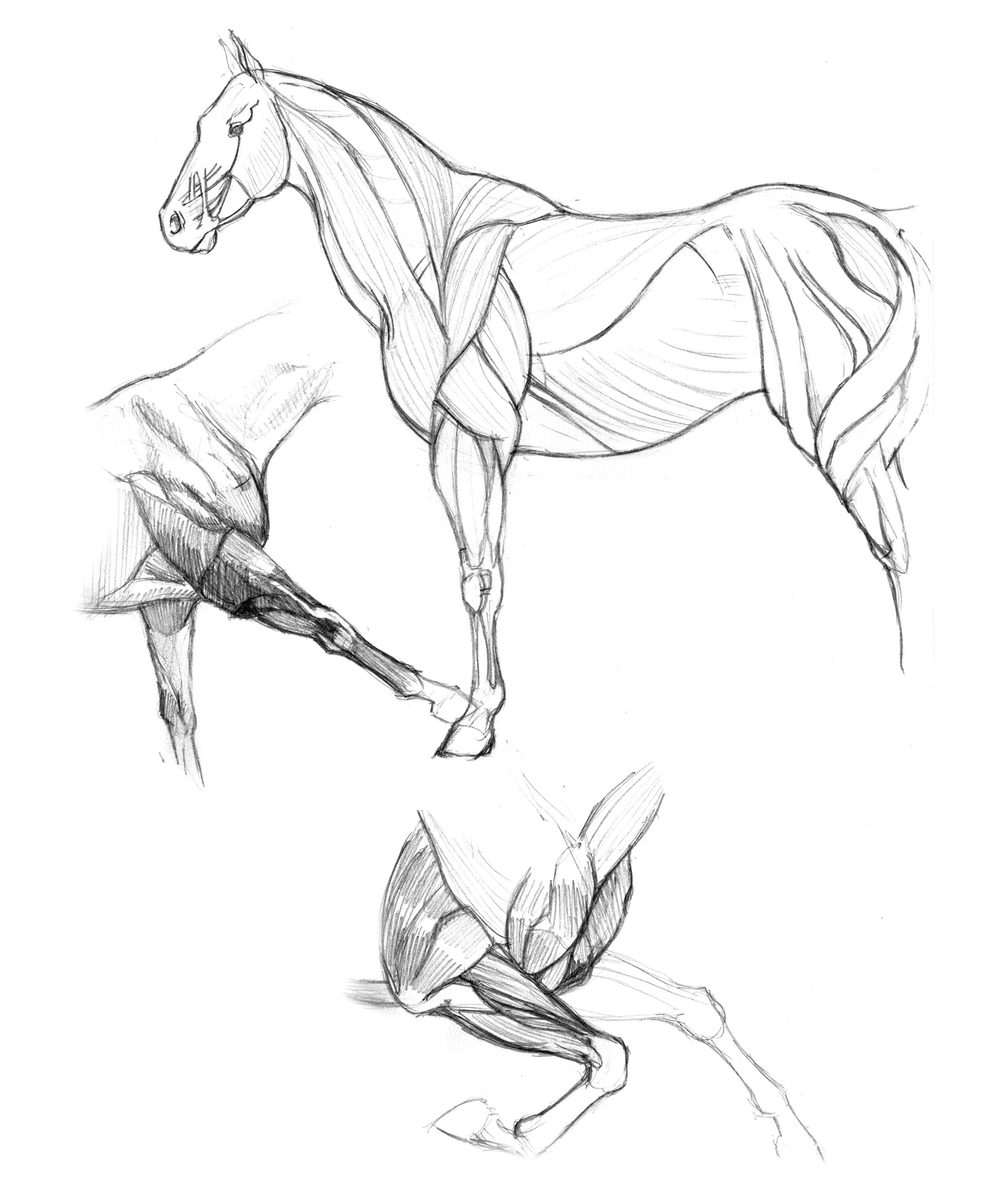 anatomy-studies-002.jpg