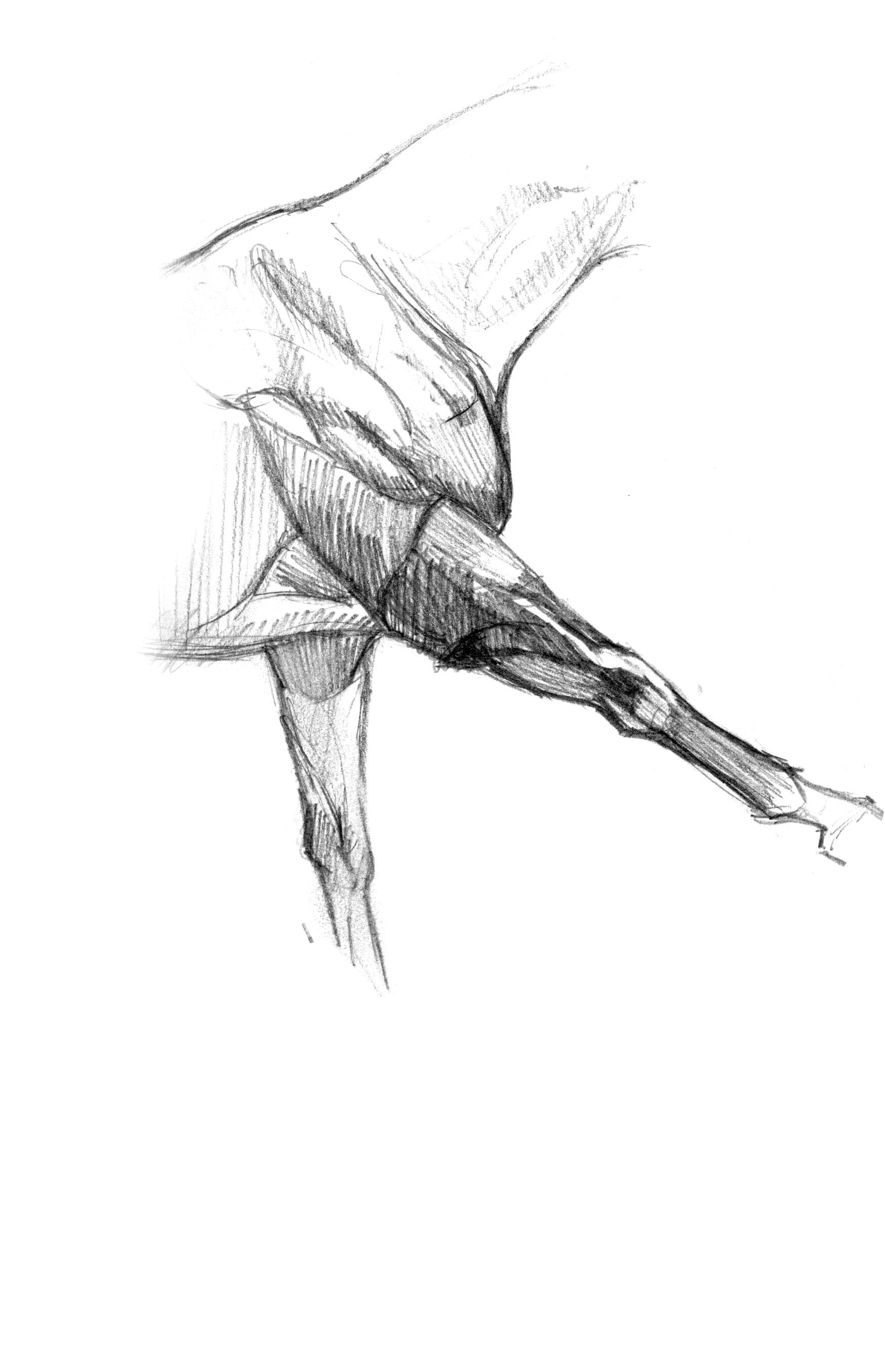 horse-anatomy-1.jpg