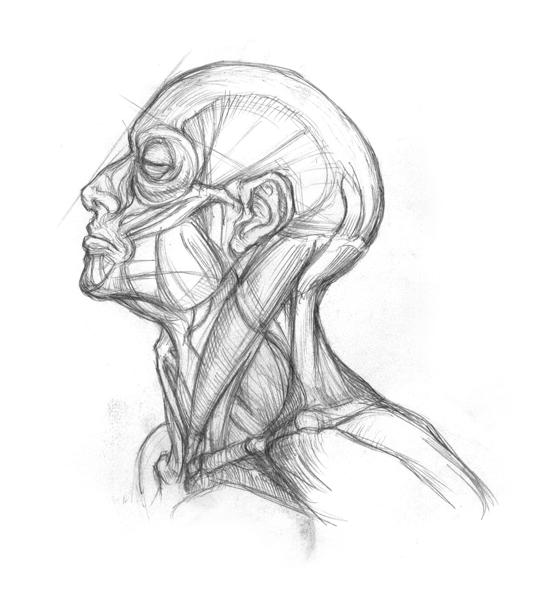 anatomy-studies-010.jpg