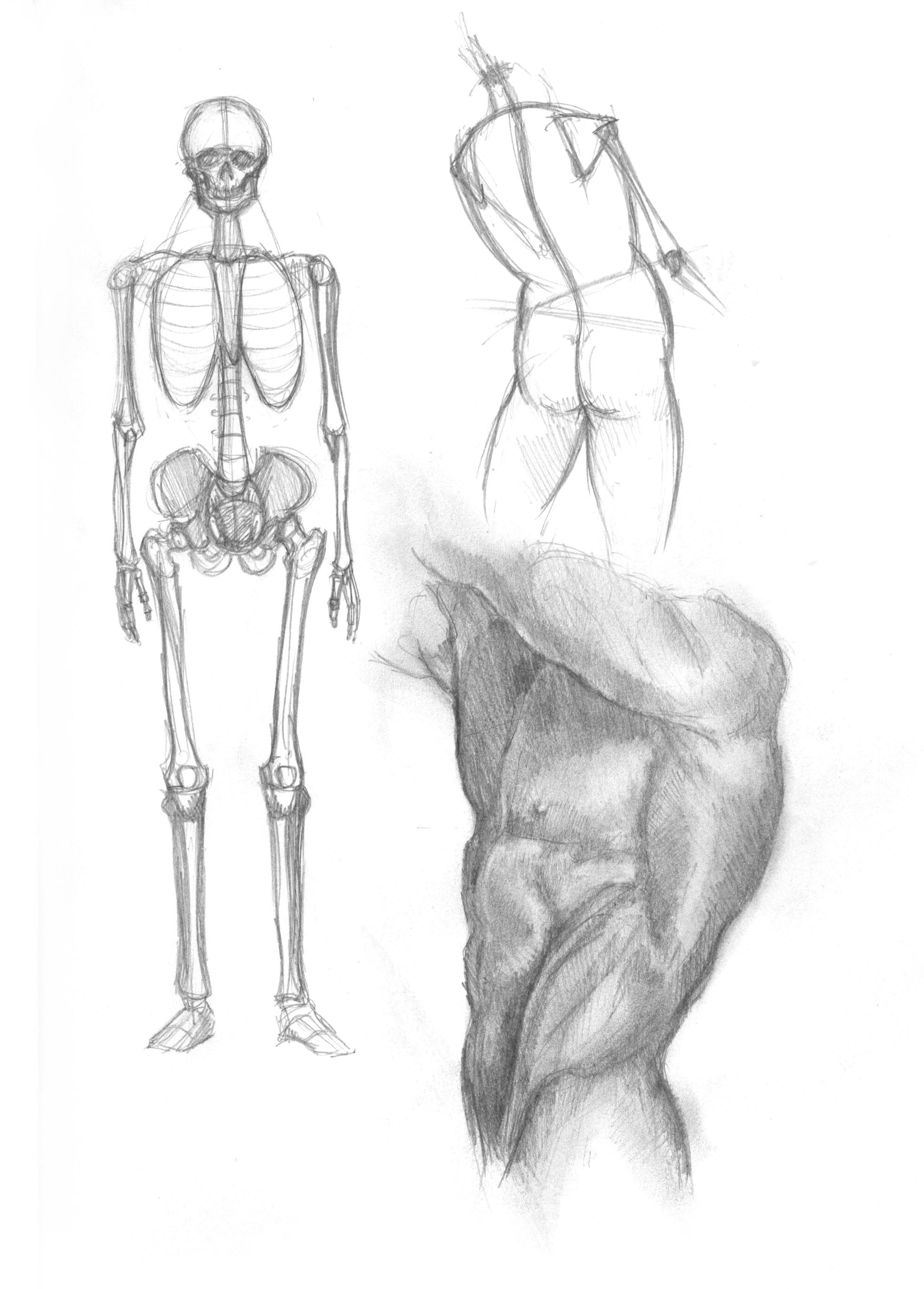 anatomy-studies-011.jpg