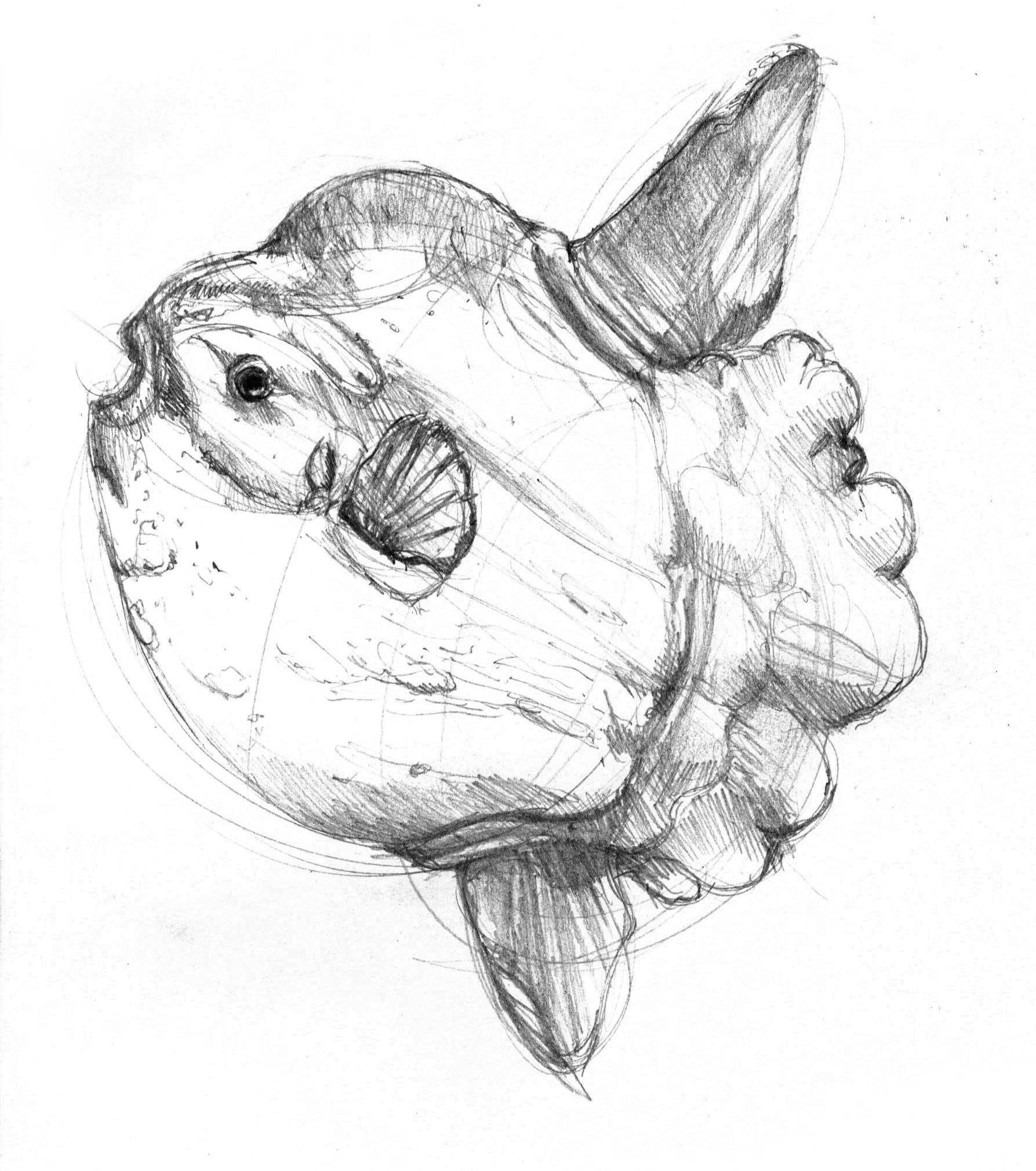 anatomy-studies-015.jpg