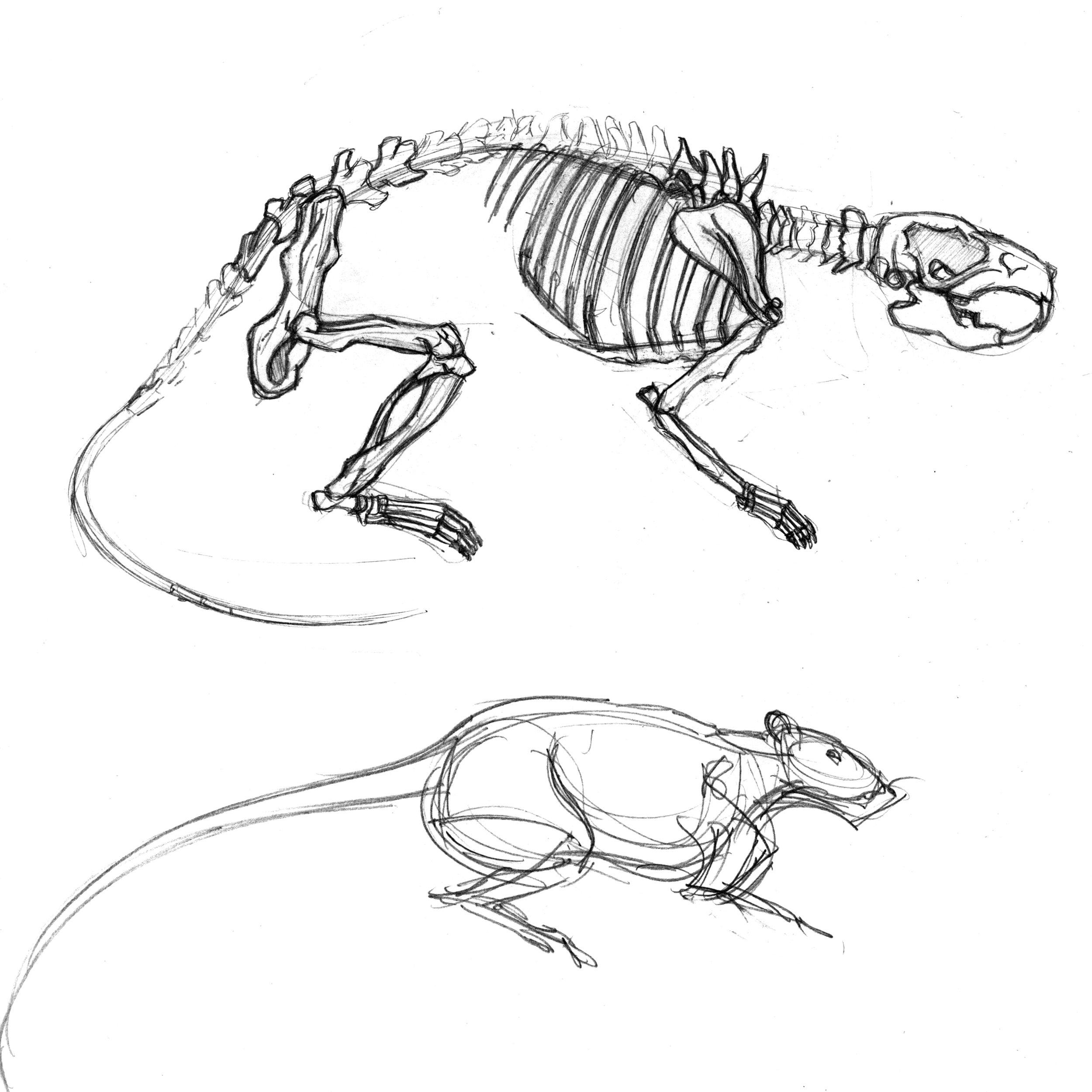 anatomy-studies-003.jpg