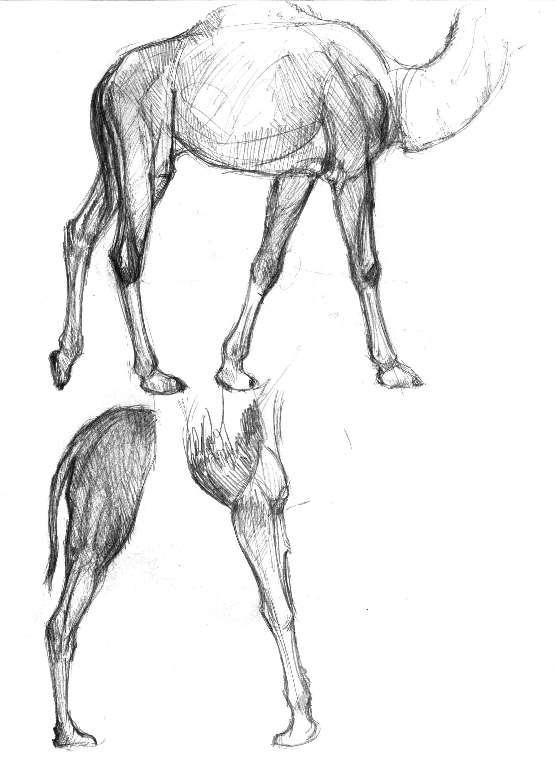 anatomy-studies-009.jpg