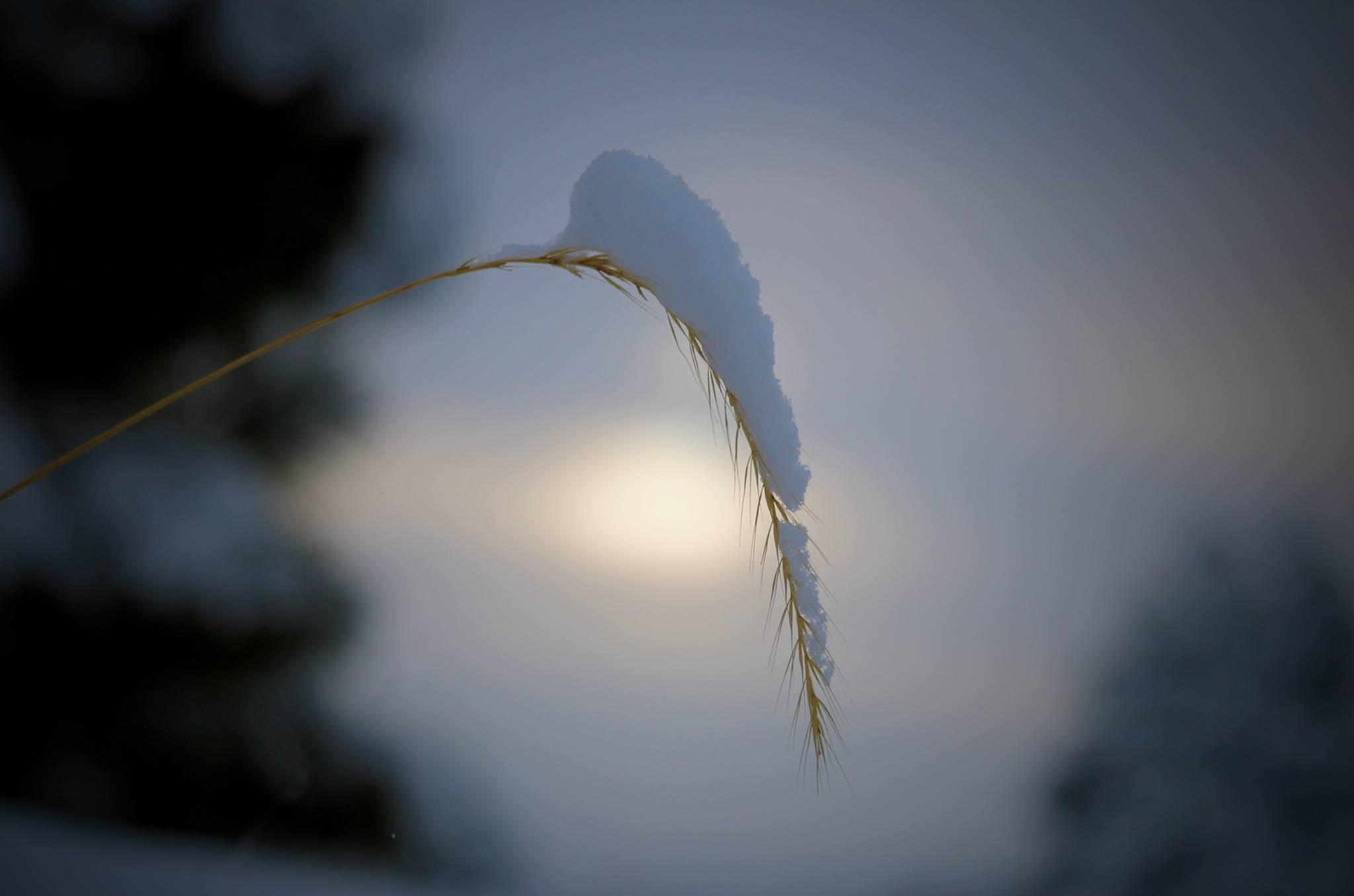 A Touch of Winter, Home, Colorado, USA