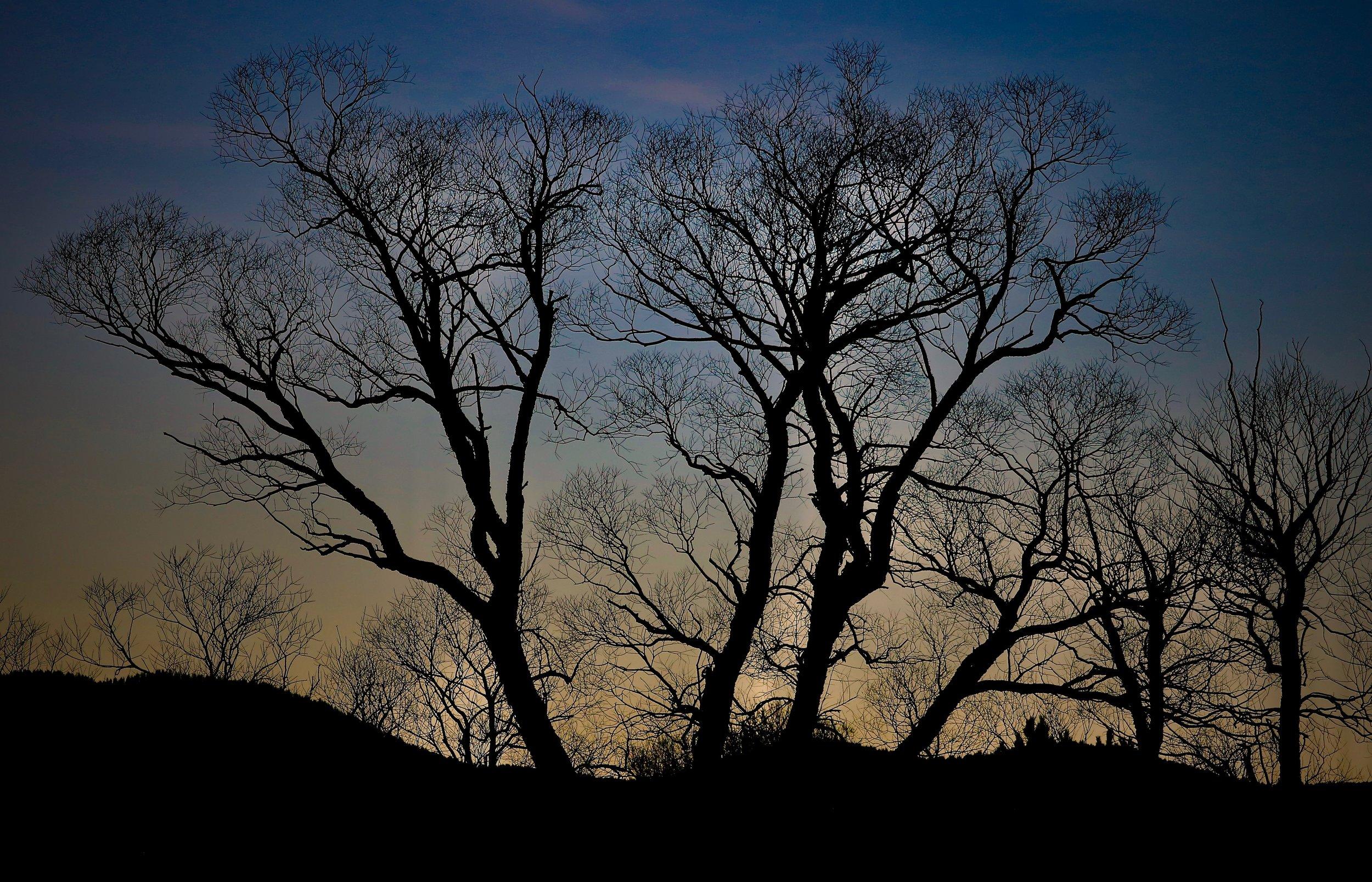 The Cottonwoods on Dirty Woman Creek, Home, Colorado, USA