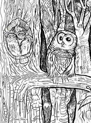 BnW_Owls-Melinda-Fabian.jpg