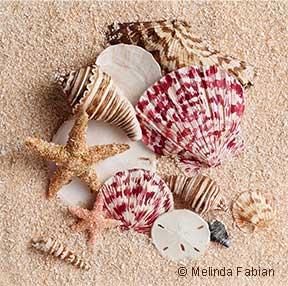 Paper Shells