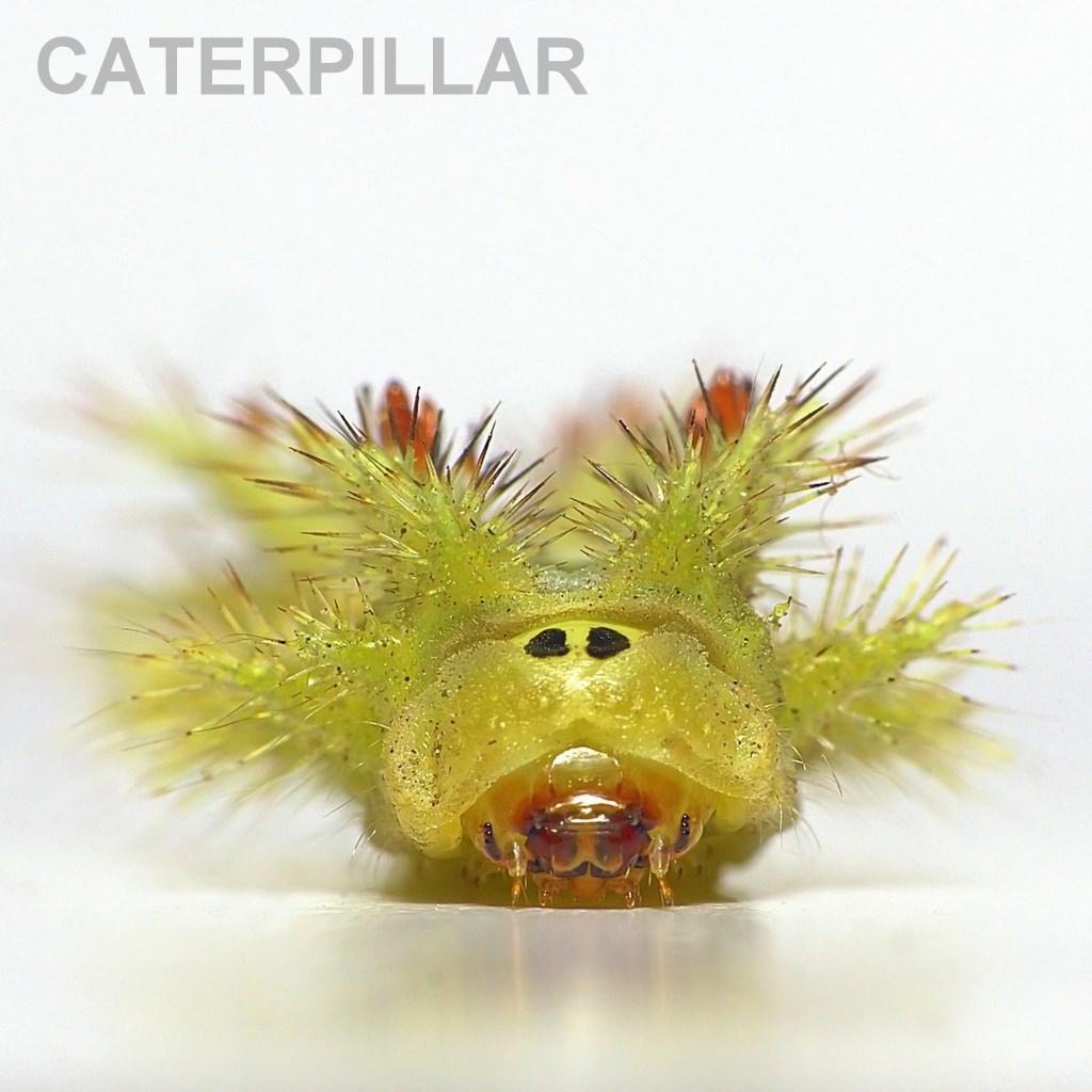 GATERPILLAR.jpg