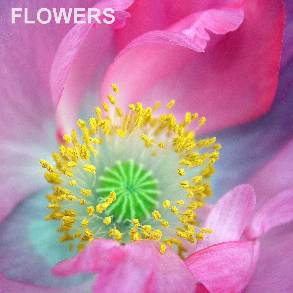 X_FLOWERS.jpg