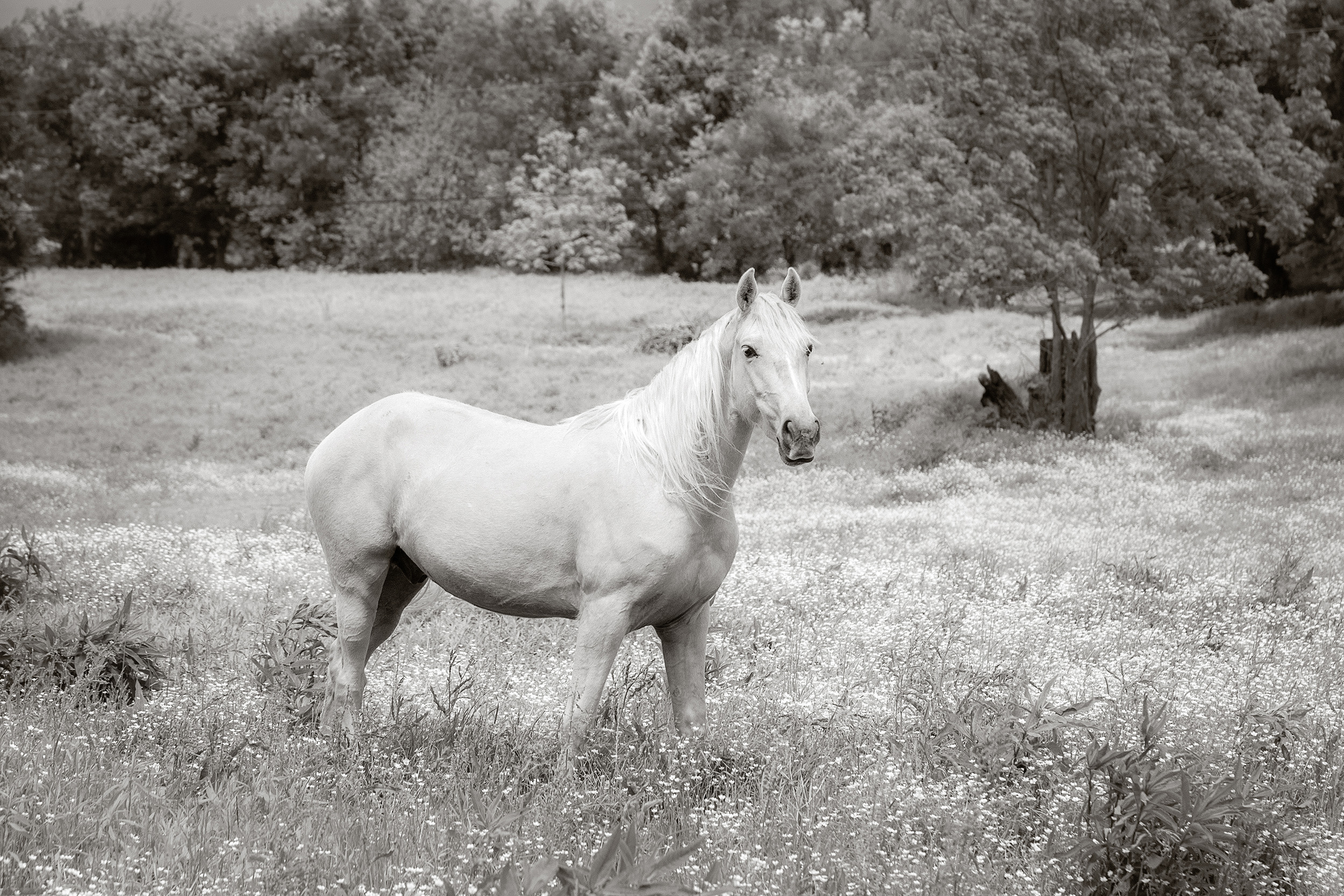 RSmith_Horse_3233BWInf_2500.jpg