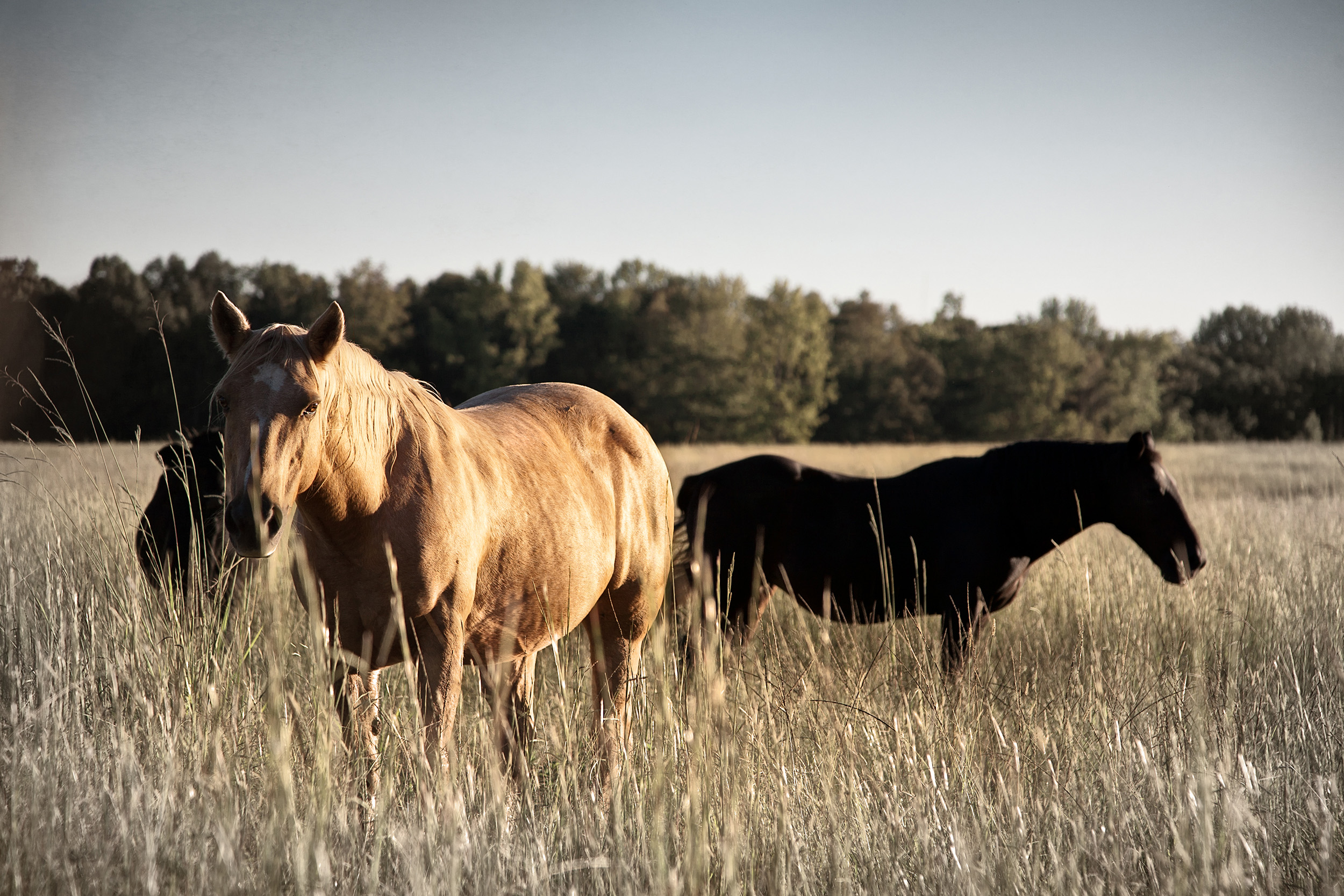 RSmith_HorsesField-1278v3_2500.jpg