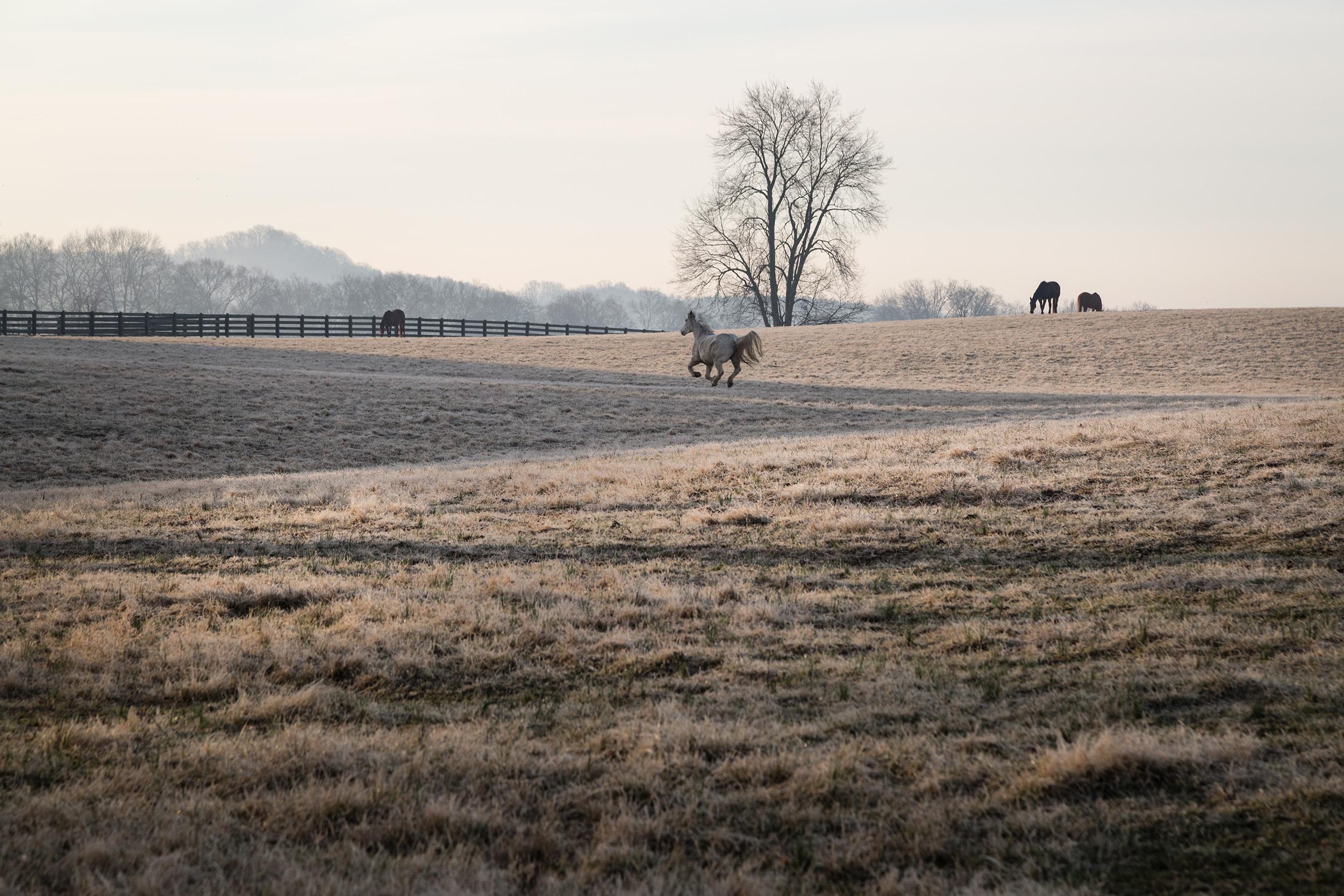 RSmith_HorsesField-1766_2500.jpg