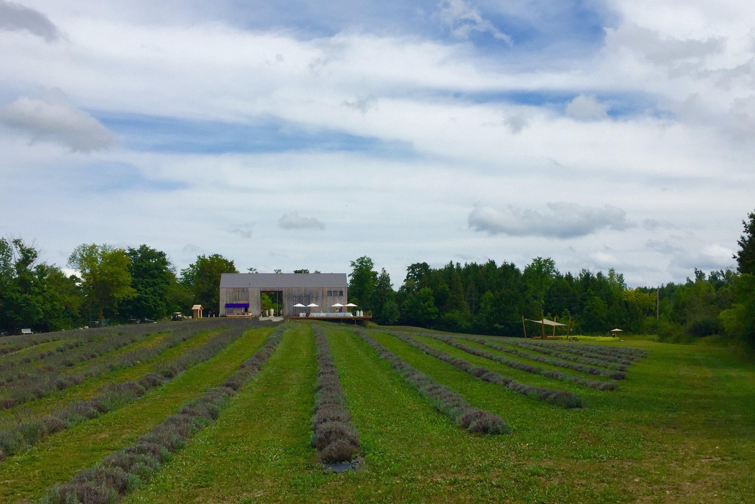 terre bleu lavender farm