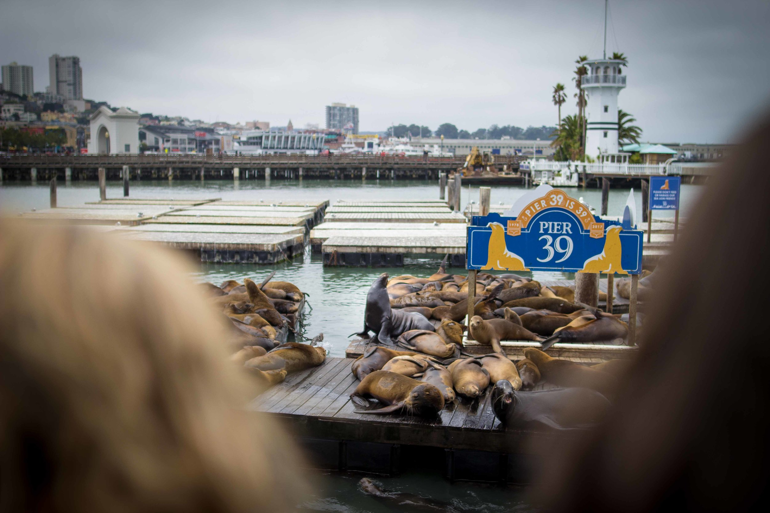 At the end of Pier 39 is approximately one million seals (ok closer to 1,000). I found  this 1990 Good Morning America segment  that documents their arrival.