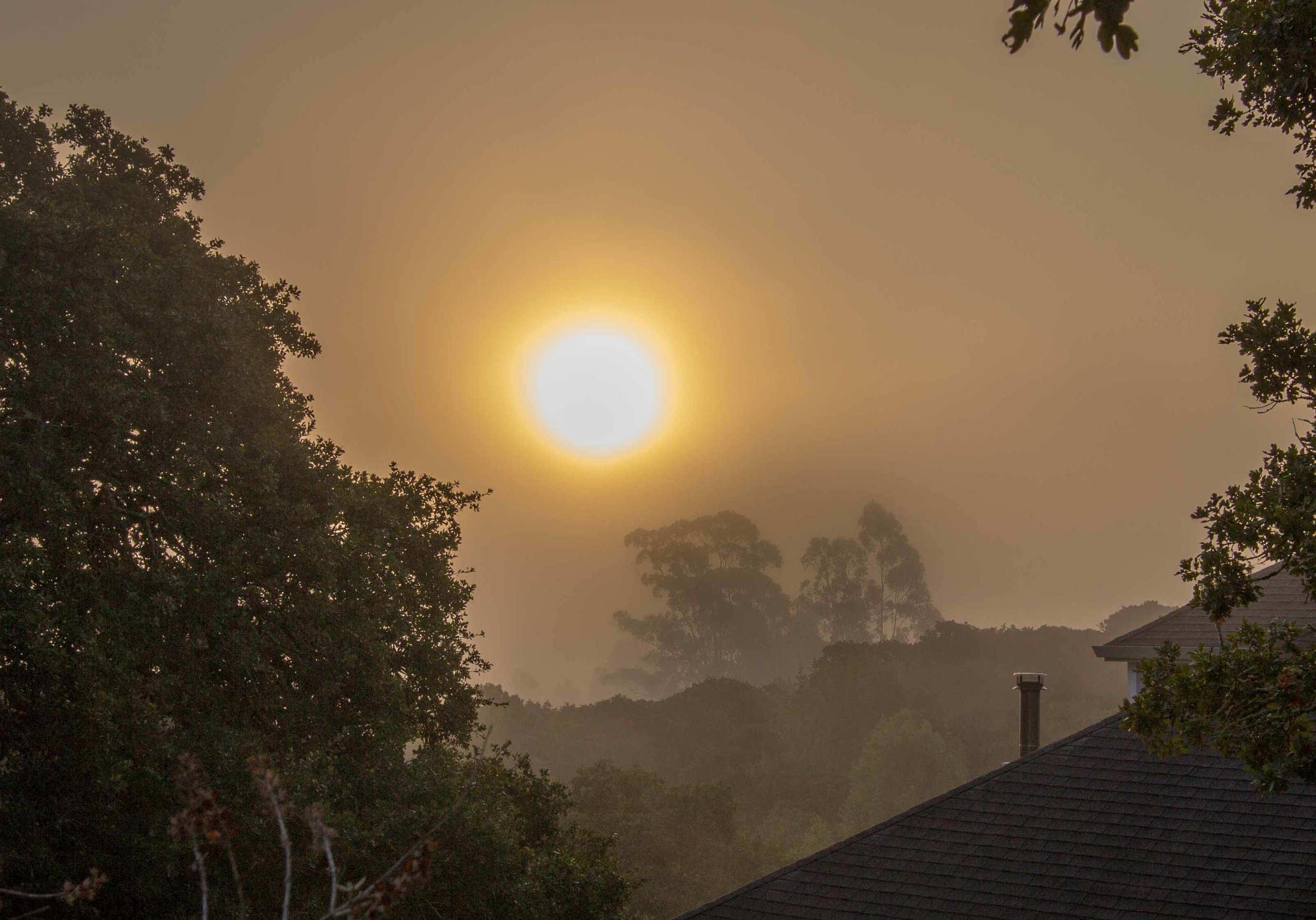 The hazy early morning sun silhouetting trees in the distance