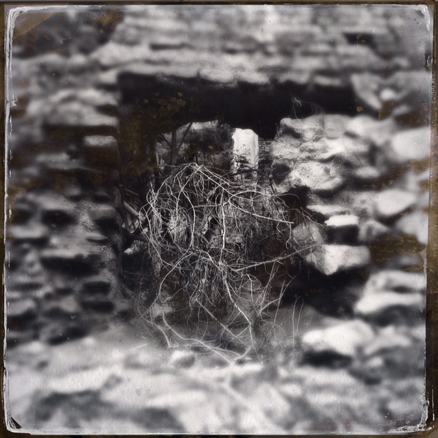 Mend Me As Only You Can Do   nature's sutures at the Monastery Ruins   Antigua, Guatemala   October 2014