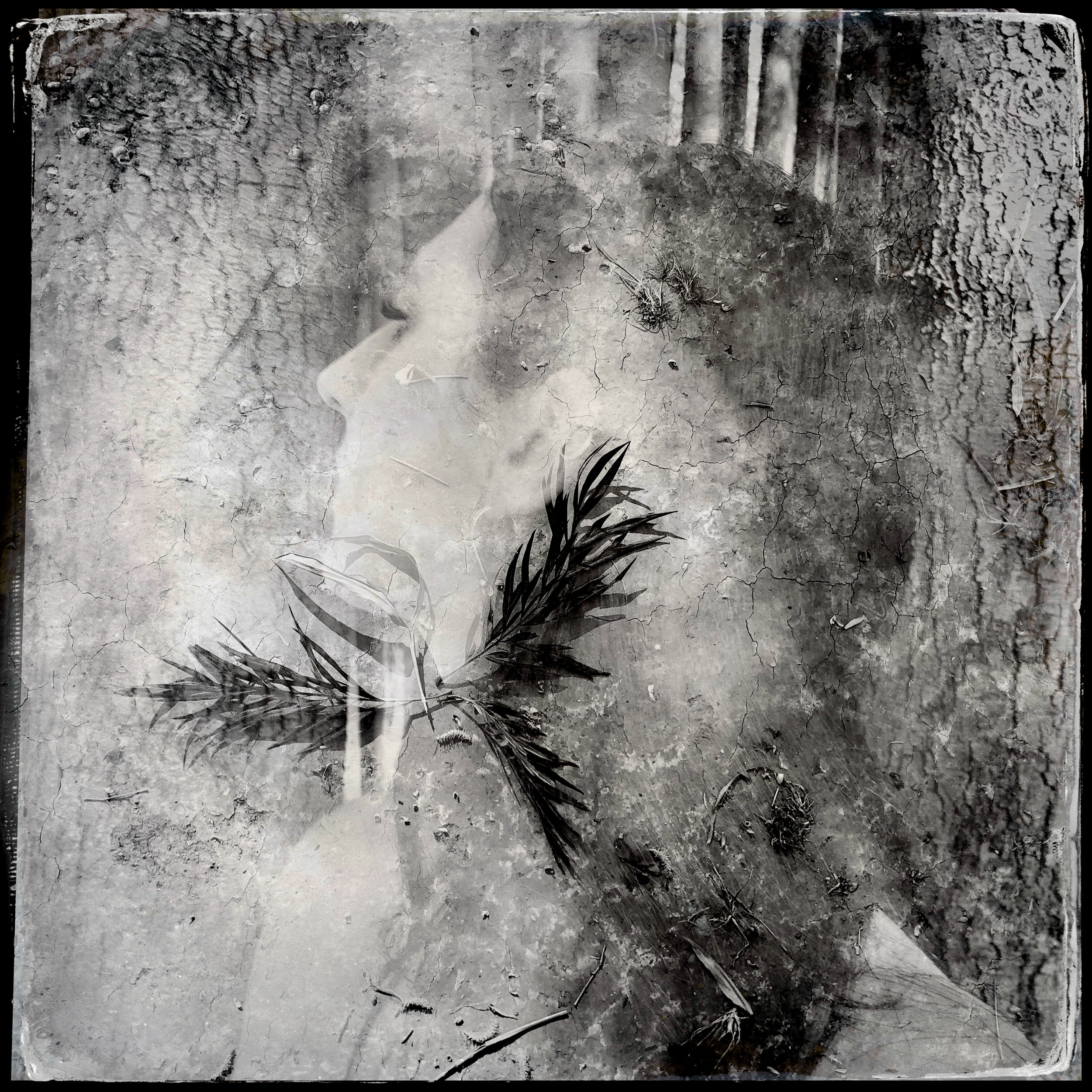 My Seer Over Heavens Above │ finding visions of phoenix flight with found leaves and dust, layered with light │Yunnan, China
