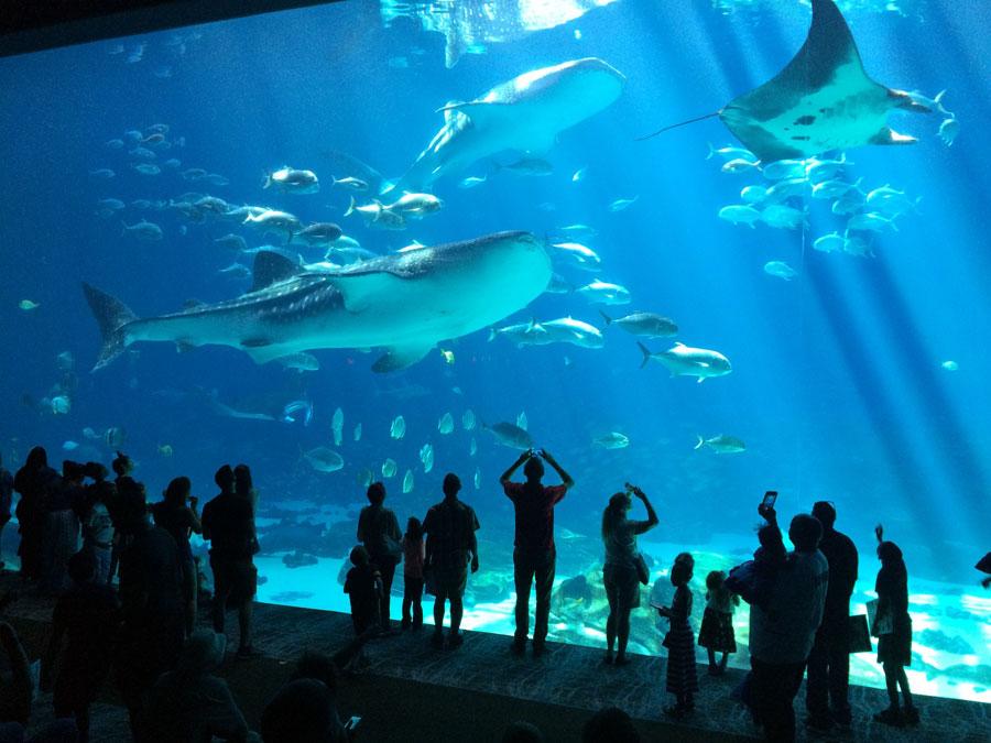 The Blue Room . Scenes from the  Georgia Aquarium .