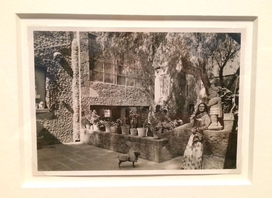 """Casa Azul.  This is Frida in her garden outside the walls of the house in which she was born and passed away in. It is one of my favorite pictures at the show because it features: """"her hairless dog Xolo in a jacket at her feet""""."""