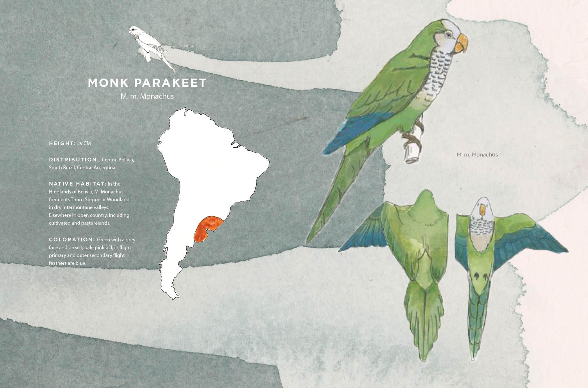 Parrot Spread7.jpg