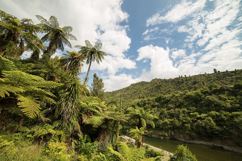 NewZealand-GroovyBanana-VanuatuPhotographers-Photography_0033.jpg