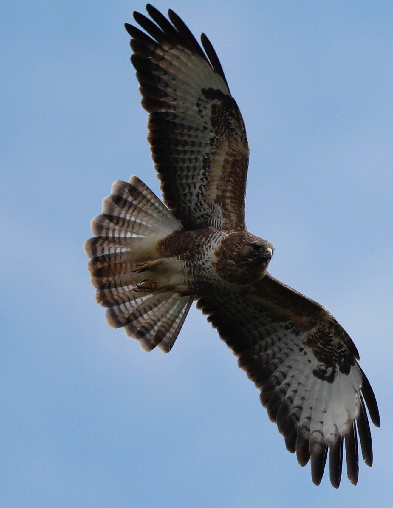 bird_photography_33.jpg