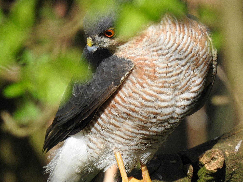 bird_photography_2.jpg