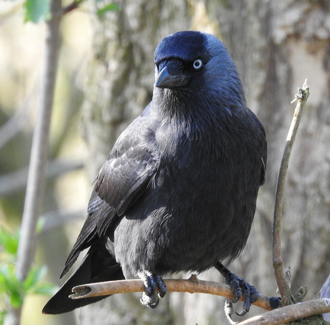bird_photography_3.jpg