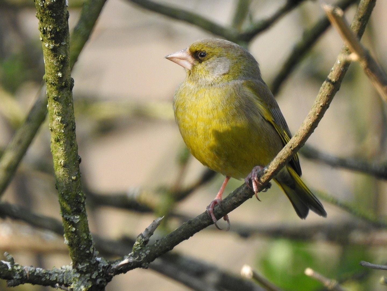 bird_photography_4.jpg