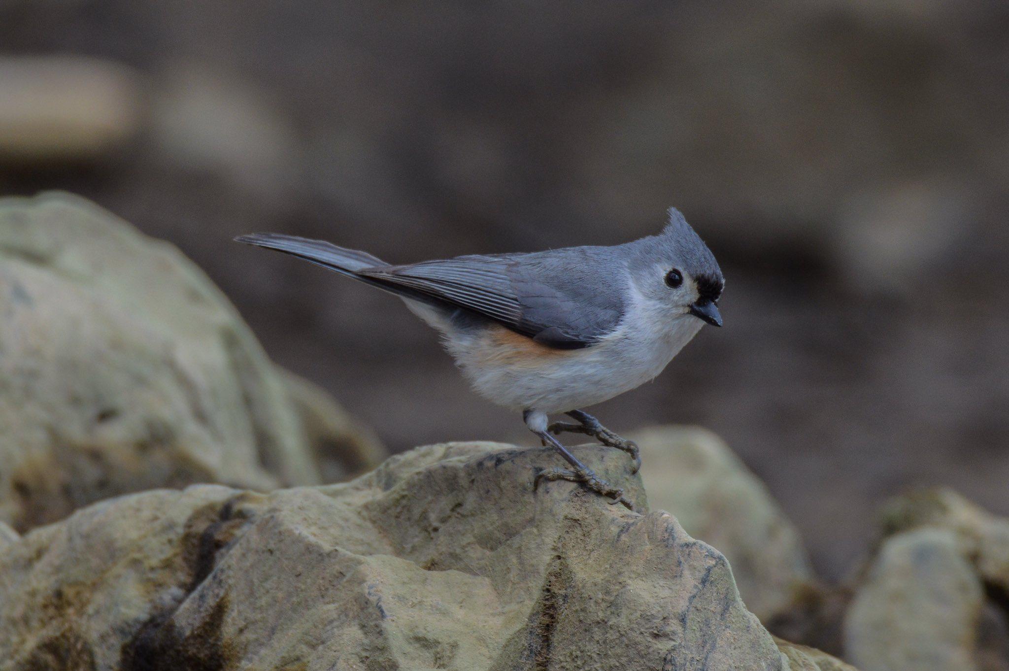 bird_photography_5.jpg