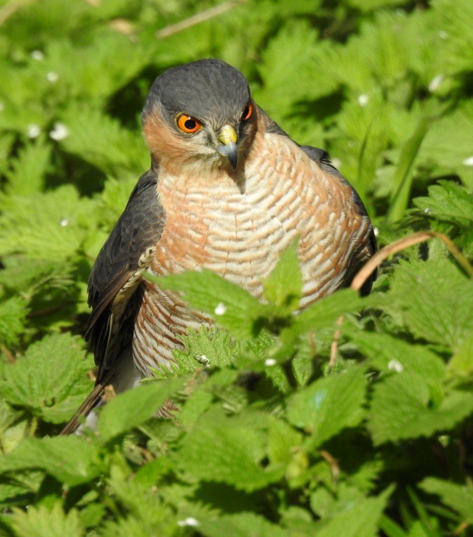 bird_photography_9.jpg