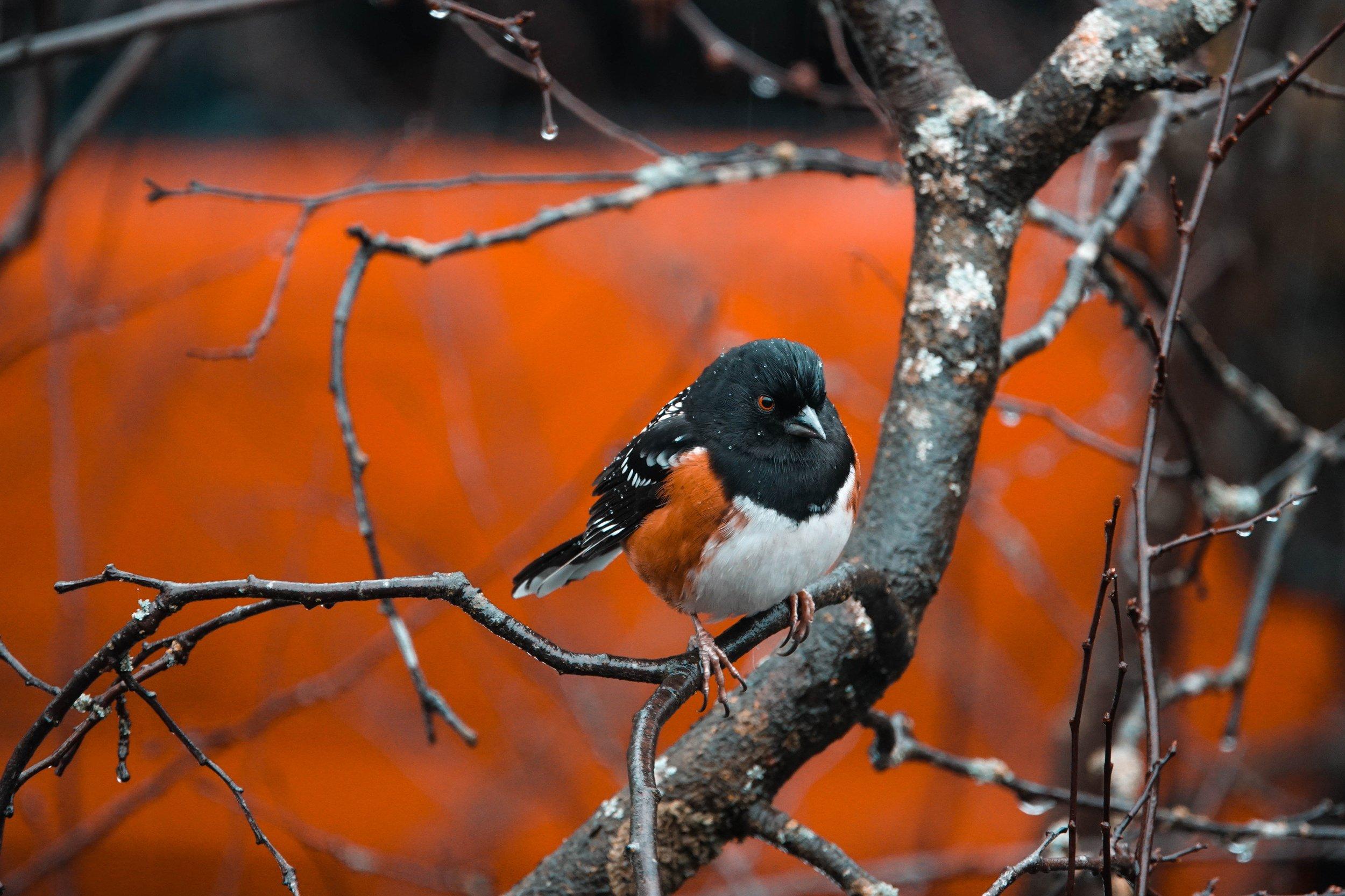 bird_photography_7.jpg