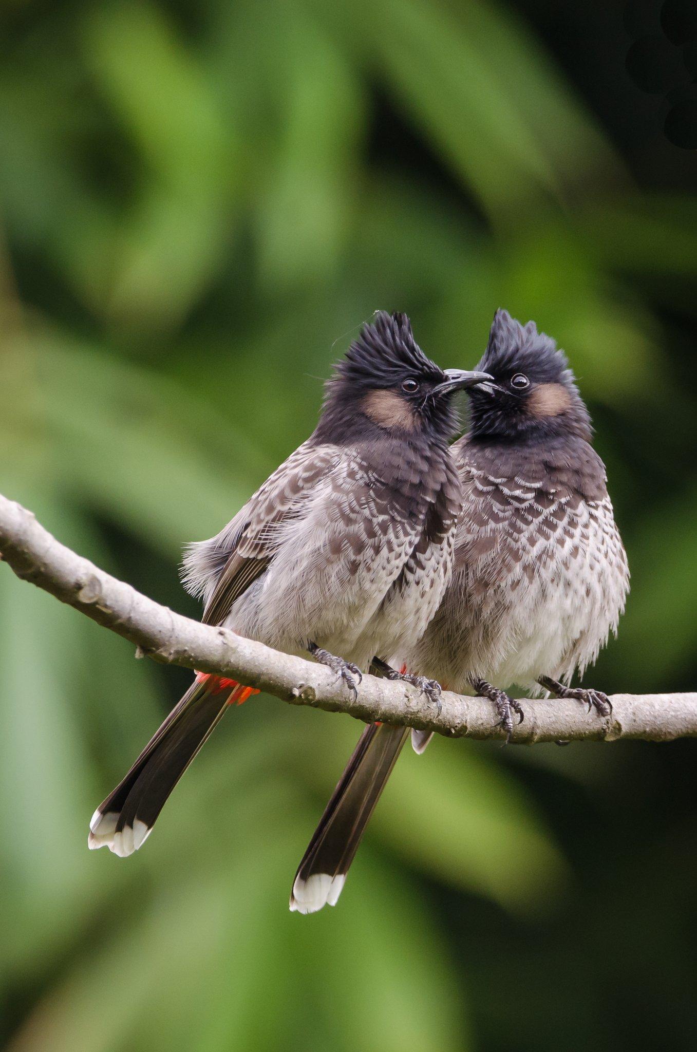 bird_photography_10.jpg