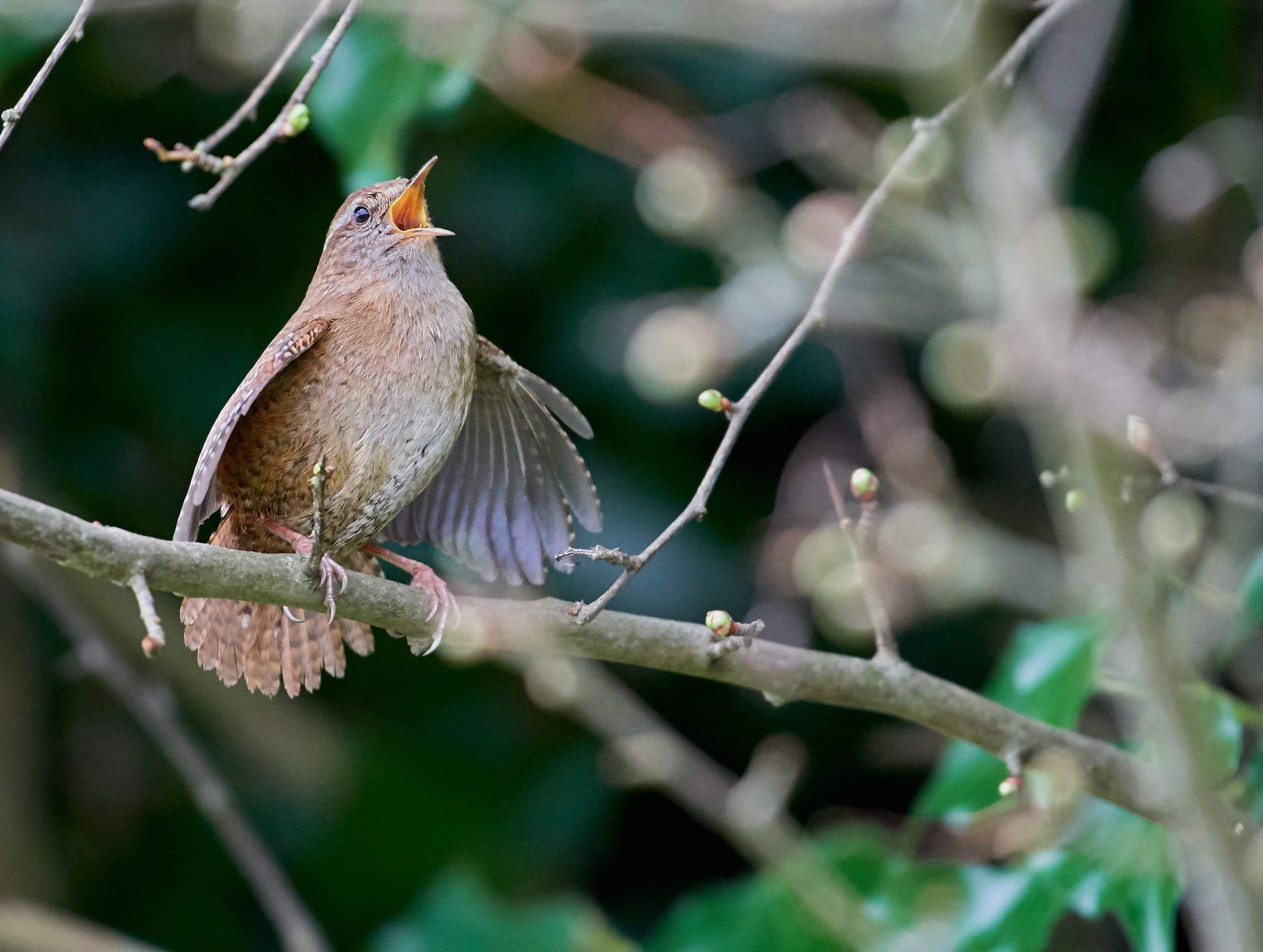 bird_photography_11.jpg