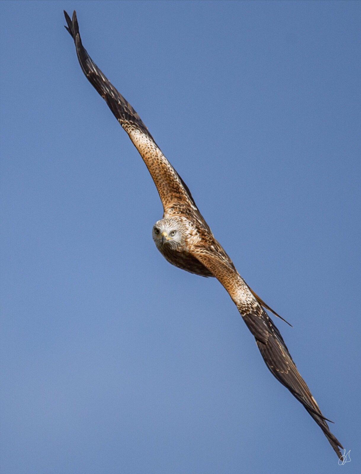 bird_photography_12.jpg
