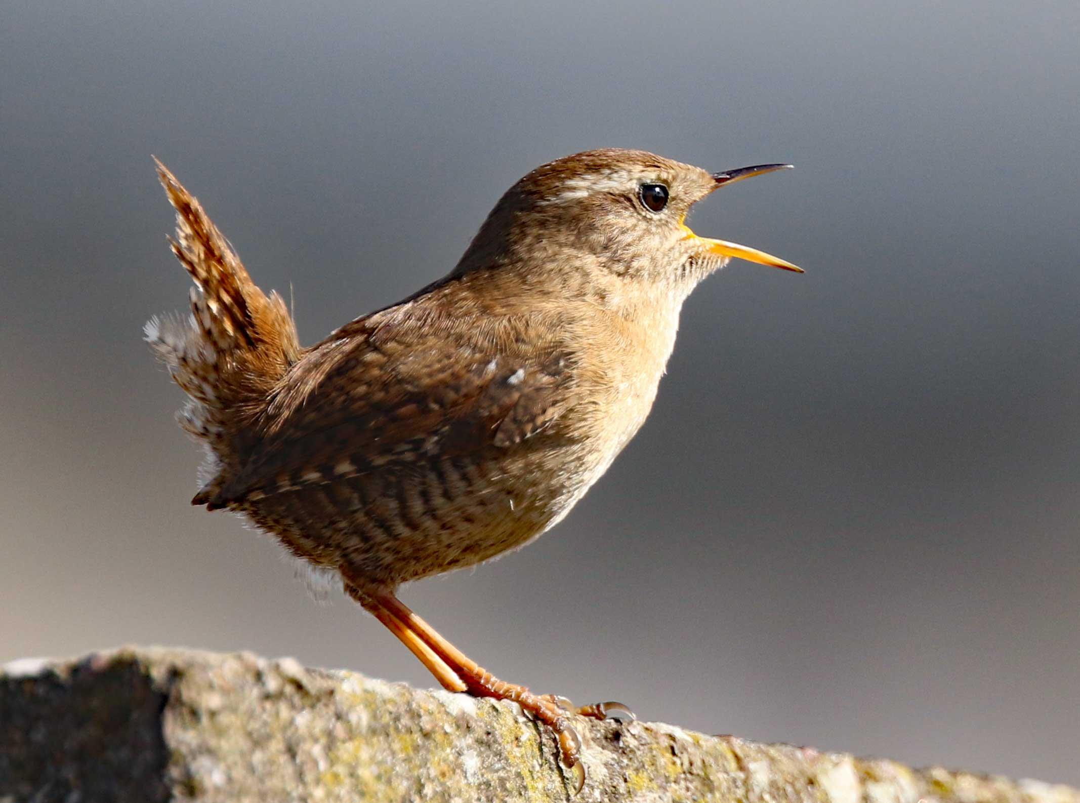 bird_photography_14.jpg