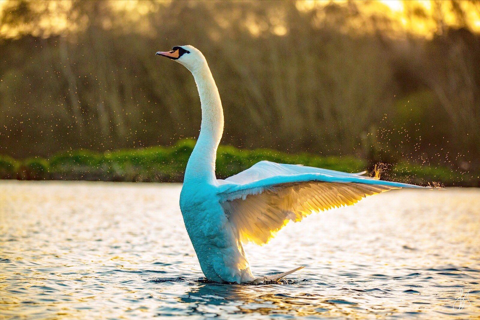 bird_photography_15.jpg