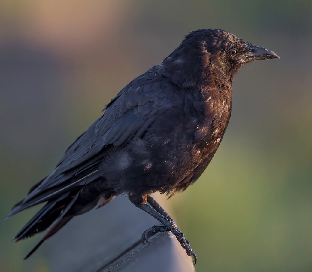bird_photography_16.jpg