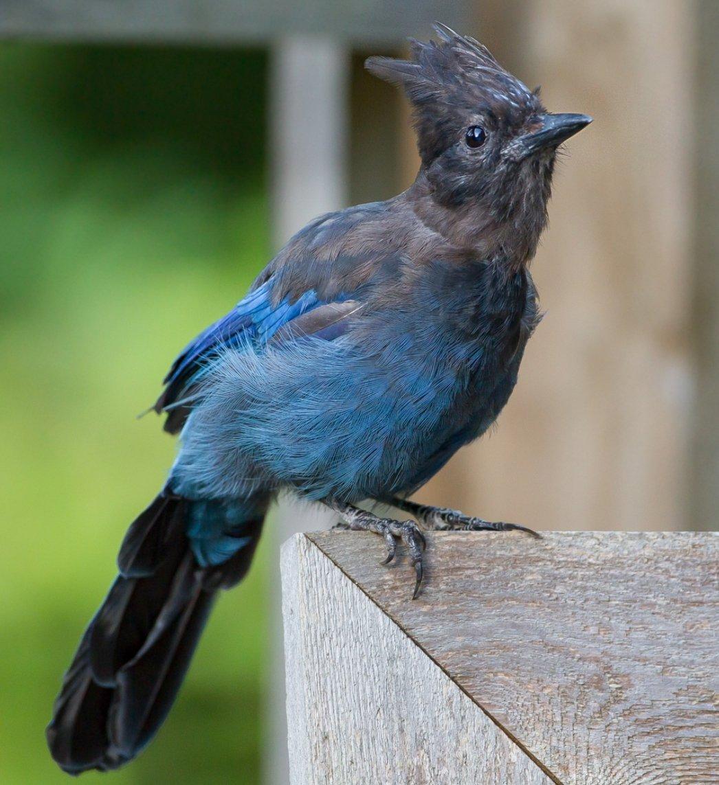 bird_photography_17.jpg