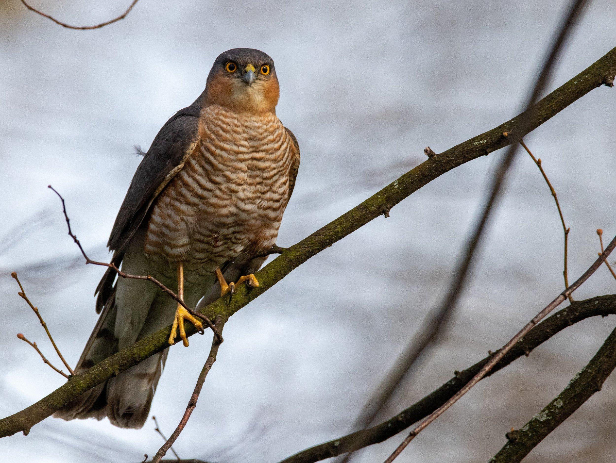 bird_photography_13.jpg