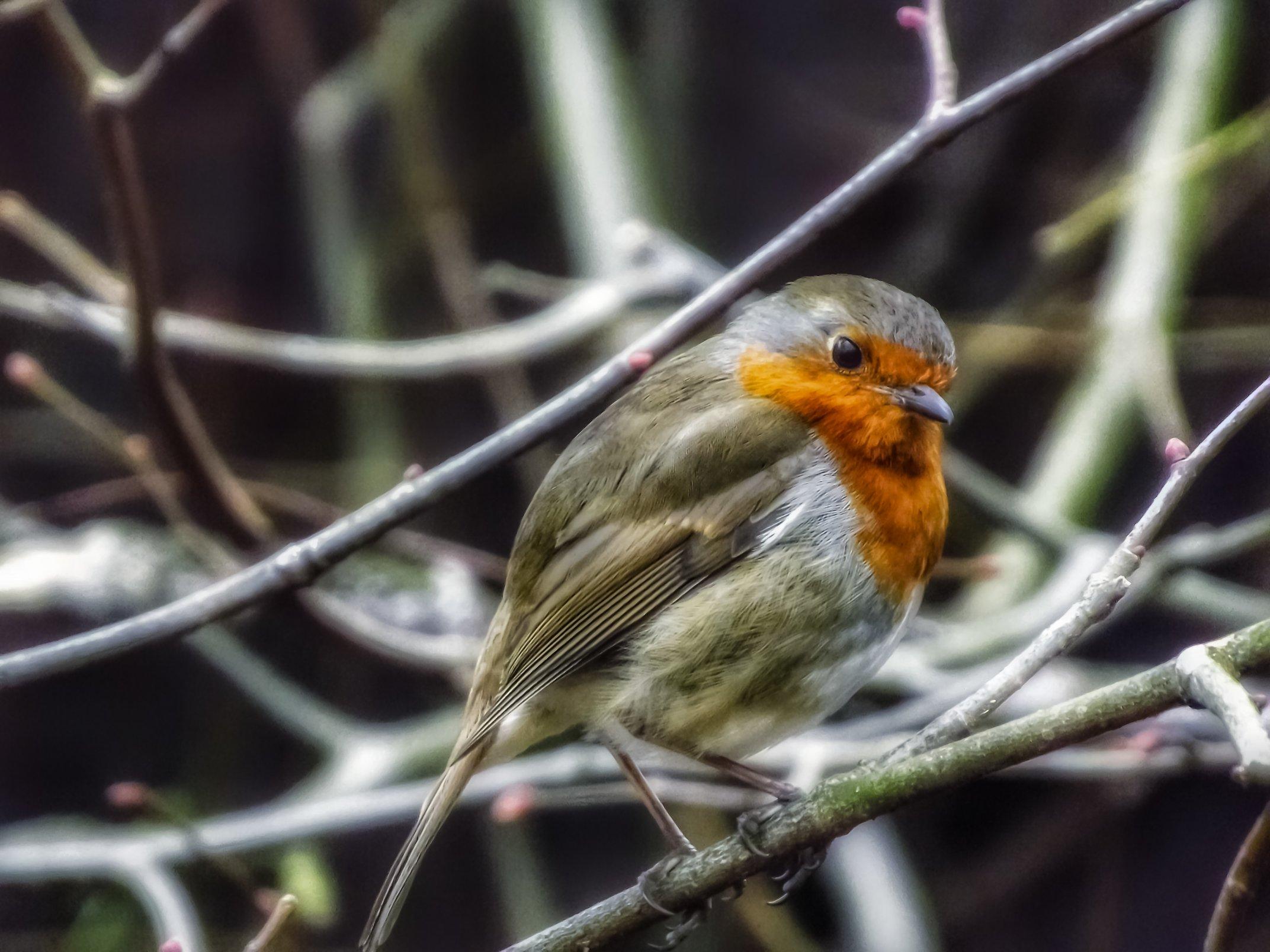 bird_photography_18.jpg