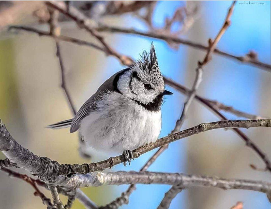bird_photography_21.jpg