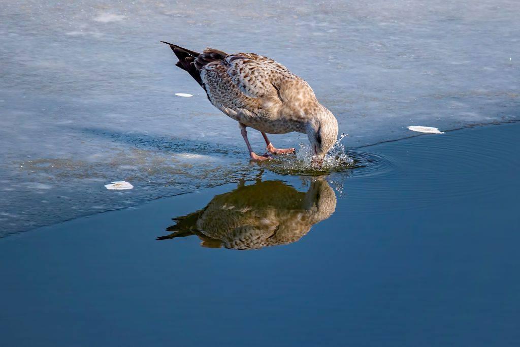 bird_photography_25.jpg