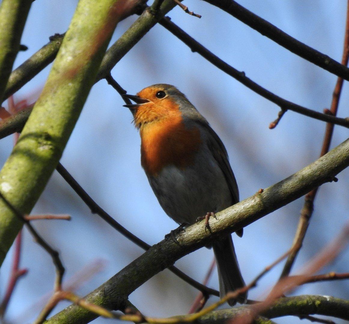 bird_photography_24.jpg