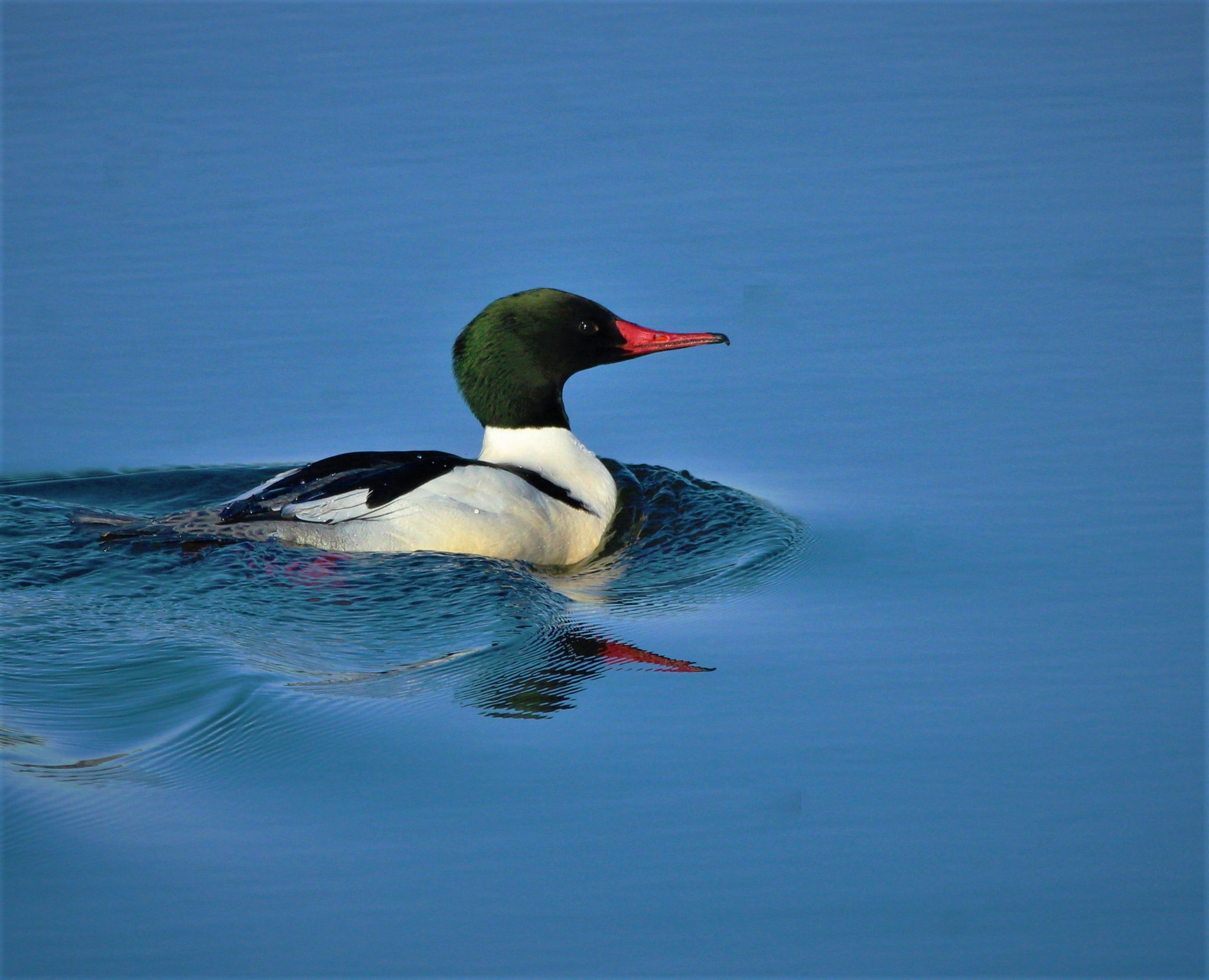 bird_photography_27.jpg