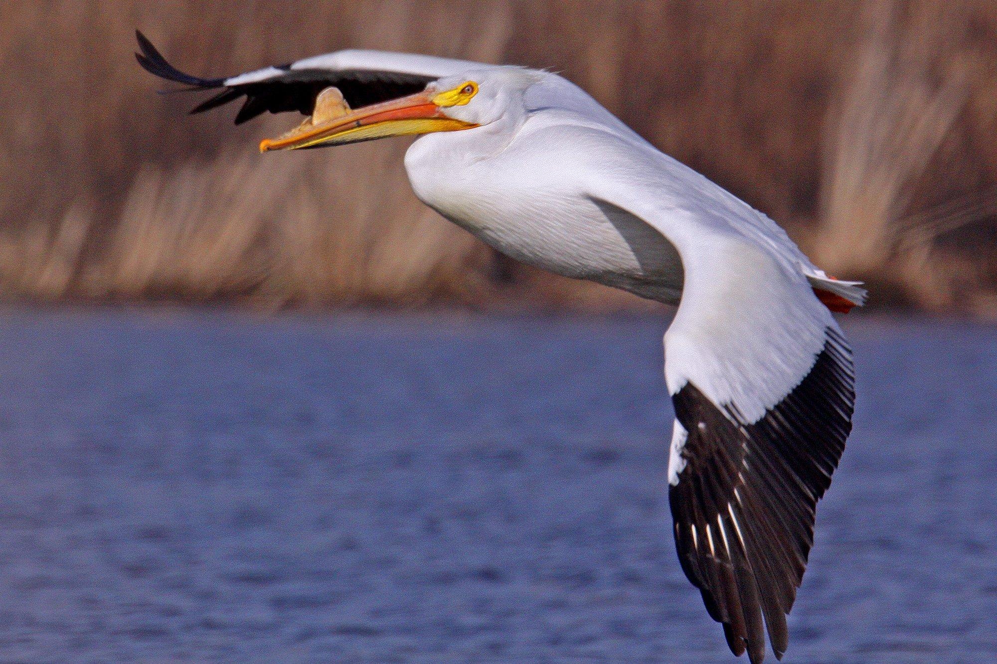 bird_photography_26.jpg