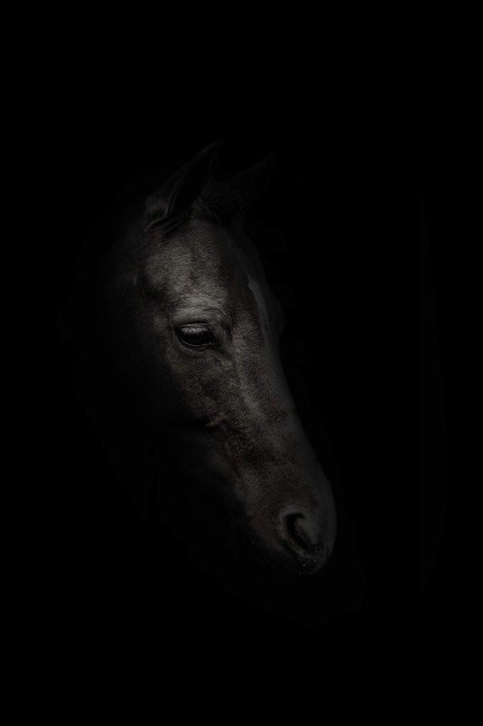 horse_wildlife_photography_4.jpg