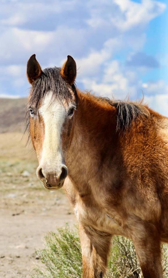 horse_wildlife_photography_23.jpg