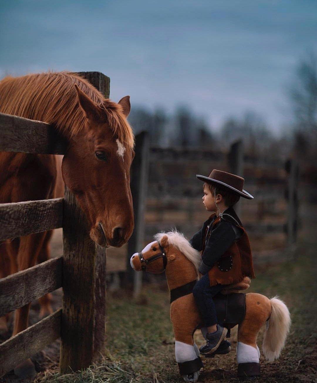 horse_wildlife_photography_27.jpg